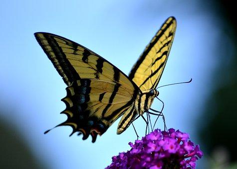butterfly-2144506__340